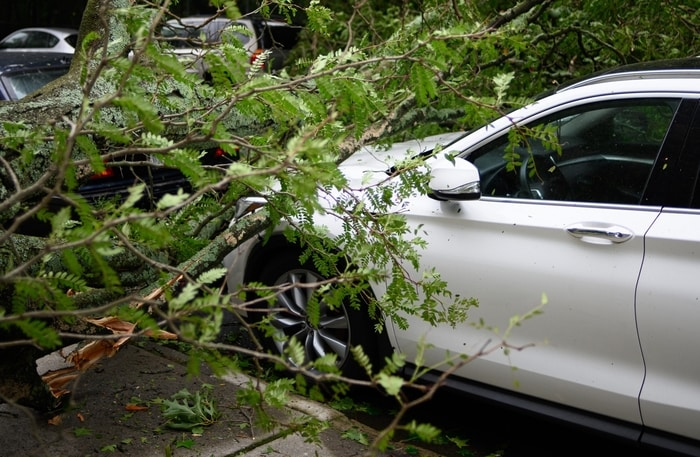 Fallen tree limbs on car from storm