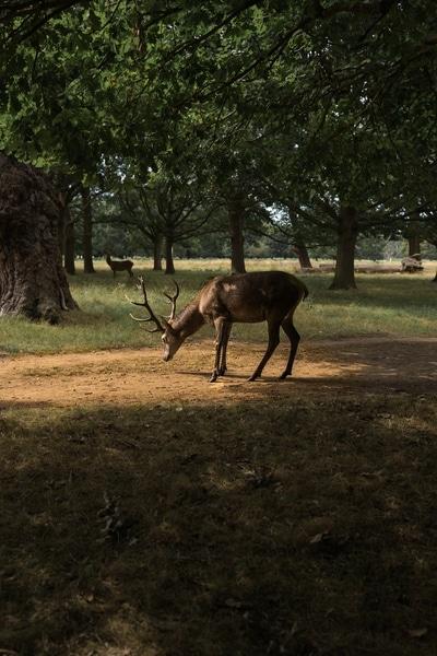 a-better-choice-insurance-hit-a-deer